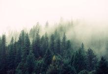 nature-voices